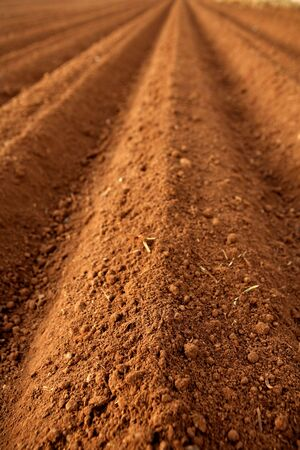 sow: Ploughed red clay soil agriculture fields ready to sow