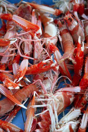 Mediterranean crustacean, Nephrops Norvegicus in red and white photo