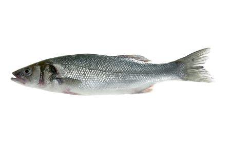 seabass: Lubina, lubina pescado blanco macro aislados en detalle