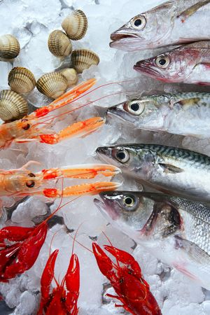 fish store: Seabass, mackerel, hake fish, nephrops, crabs and clams seafood