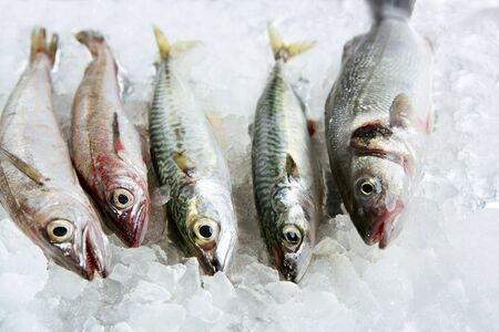 hake: Seabass, mackerel, hake fish seafood over ice Stock Photo