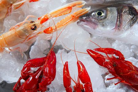Seabass nephrops, river crabs and clams seafood over ice photo