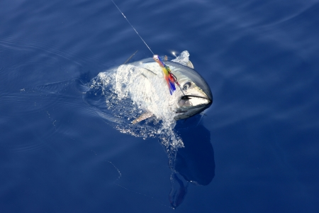 angler: Blue fin tuna Mediterranean big game fishing and release