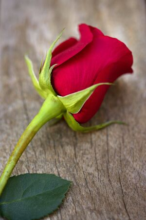 Red rose over old aged teak wood, romantic spring love metaphor Stock Photo - 5267193