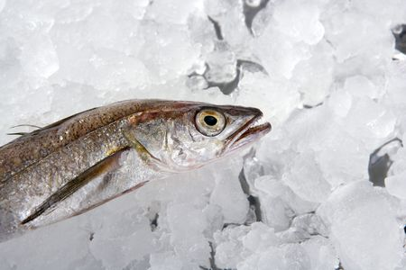 hake: Hake fish on white ice macro detail Stock Photo