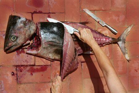 Bloody Mediterranean tuna fish preparation after catch photo