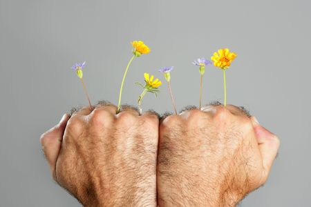 Concept and contrast of hairy man hand and spring flower fragility photo