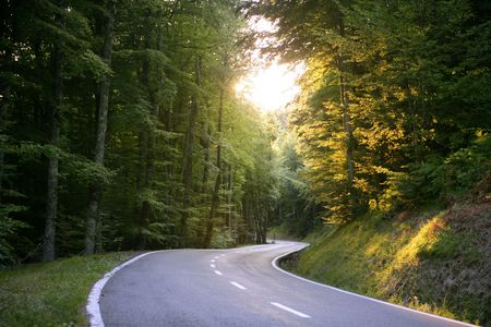empty street: Asphalt winding curve road in a beech green forest