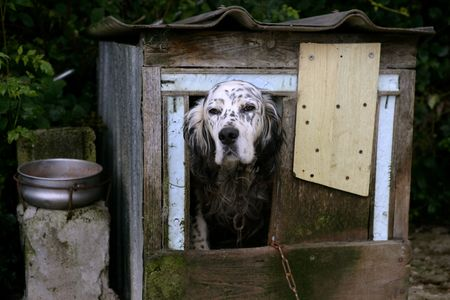 Adorable shetter dog in its wooden mountain house photo