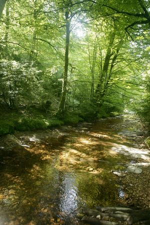 Beech forest trees with river flow under shadows photo