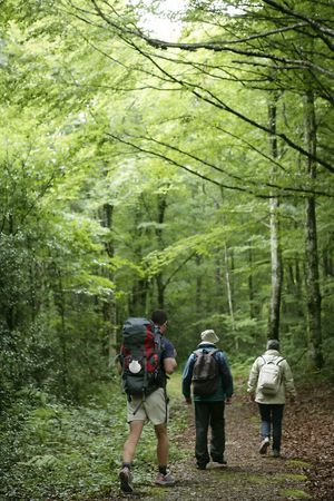 Adventure hiking on beech forest of Navarra Pyrenees in Irati photo