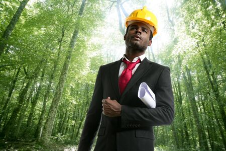 american beech: Archictect with plans and helmet in an ecological forest project Stock Photo