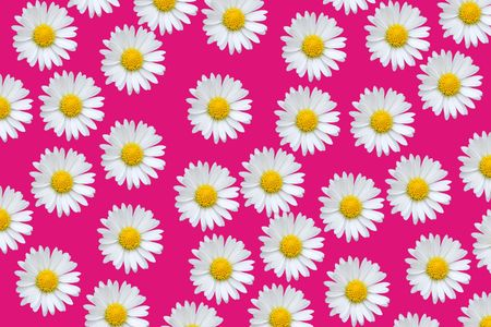 Colorful pattern background with daisy flowers over pink photo