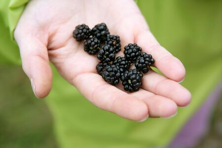 Blackberries on a farmer woman hand in the forest photo