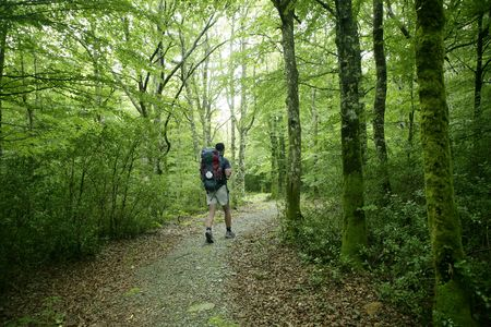 navarra: Adventure hiking on beech forest of Navarra Pyrenees in Irati