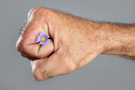 fragility: Concept and contrast of hairy man hand and spring flower fragility Stock Photo