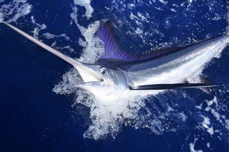 pez espada: Pesca sobre azul oc�ano de agua salada de deportiva de gran juego de Atl�ntico de marlin blanco