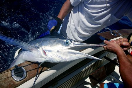 Billfish white Marlin catch and release on boat board Stock Photo - 5965046