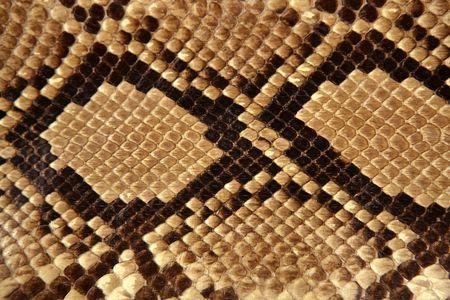 snake skin pattern: Background snake skin pattern brown and beige color