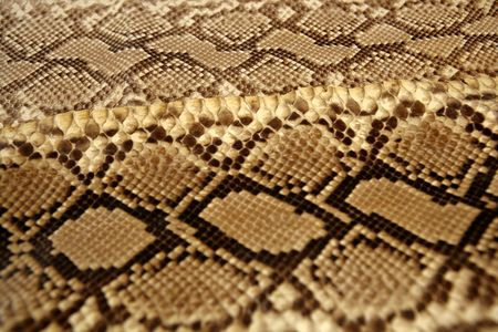 Background snake skin pattern brown and beige color photo