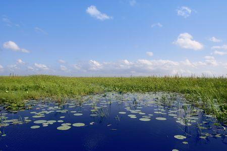 pantanos: Cielo azul en el horizonte de las plantas verdes de humedales Everglades de Florida, naturaleza
