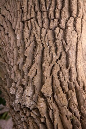Brown tree trunk texture background in nature photo