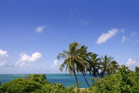 florida landscape: Florida Keys tropical palm trees turquoise sea blue sky