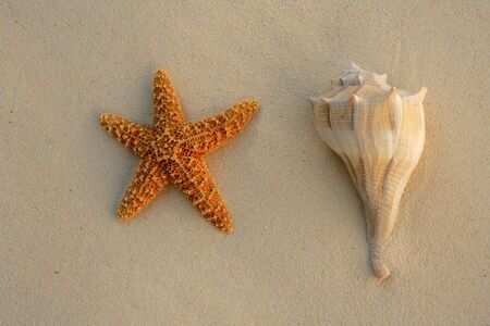Caribbean beach sand with sea shells and starfish, texture photo