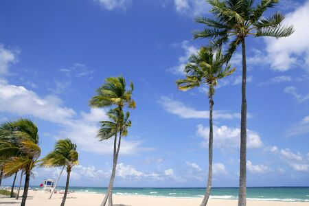 the fort: Fort Lauderdale Florida tropical beach with palm trees over blue sky