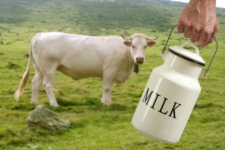 Milk pot urn on farmer hand with cow in meadow background photo