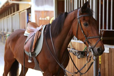 blanket horse: Brown horse in stable door rigged with saddle and reins Stock Photo