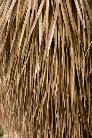 Hojas de árbol de Palma secas usados como un sistema de techo de la casa tropical  Foto de archivo - 6385938