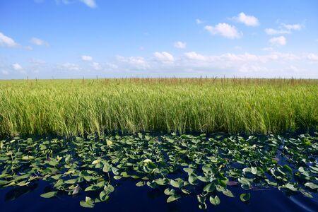 Blue sky in Florida Everglades wetlands green plants horizon, nature