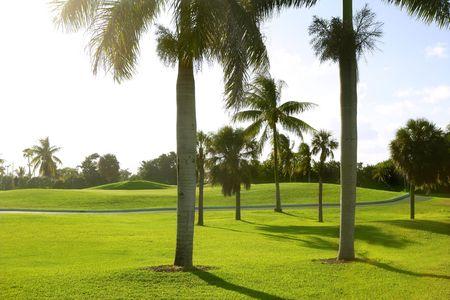 key biscayne: Miami Key Biscayne Golf tropical green grass field palm trees