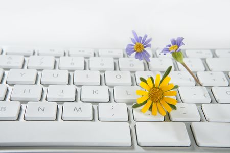 Concept of flowers growing from computer, ecology metaphor photo
