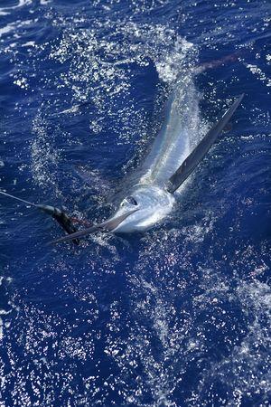 pez espada: Pesca deportiva de peces de hermoso de marlin blanco real del proyecto de ley sobre el agua atlántica Foto de archivo