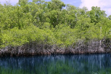 Mangroove river in everglades Florida landscape view, nature photo