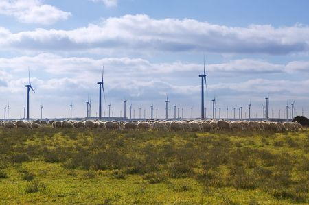 clean  electric: Green meadow with sheeps eating and clean electric energy windmils field