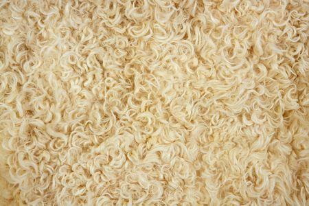 Lamb wool macro texture closeup in cream color fur photo
