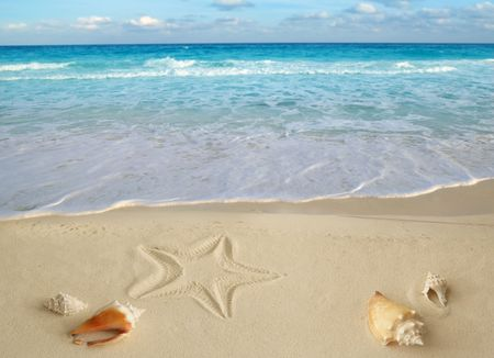 sea shells starfish on tropical sand turquoise caribbean summer vacation travel icon photo
