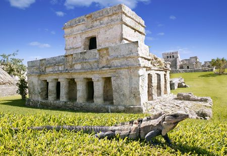 iguana on grass in Tulum mayan ruins in Mexico Quintana Roo photo