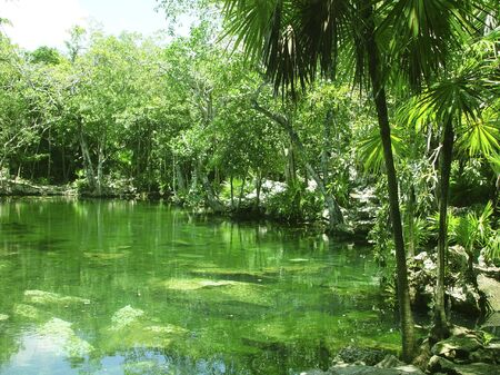 riviera maya: Cenote lago en la selva de la Riviera Maya Maya de Quintana Roo