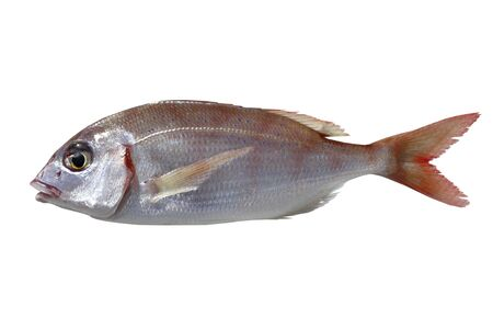 common pandora fish pagellus erythrinus isolated on white Stock Photo - 6767496