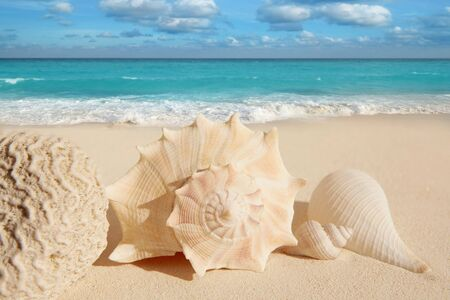 sea shells starfish on tropical sand turquoise caribbean summer vacation travel icon