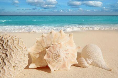 sea shells starfish on tropical sand turquoise caribbean summer vacation travel icon photo