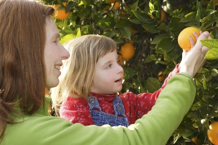 citrus family: mother showing little girl daughter orange tree fruit harvest  Stock Photo