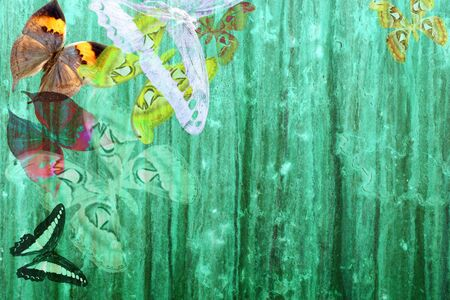 papel tapiz turquesa: Fondo de color verde de grunge con transparencia de primavera coloridas mariposas  Foto de archivo