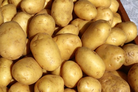 potatoes many in market stand yellow brown photo