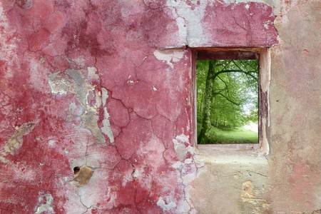 aged weathered pink grunge wall wood window view beech forest photo
