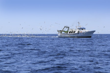 work boat: professional fisherboat many seagulls blue ocean sea sunny day